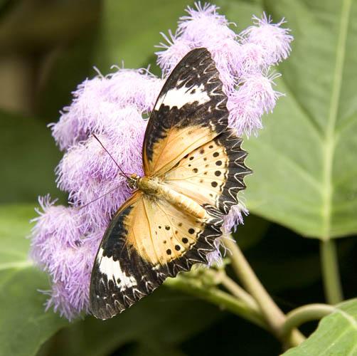 Butterfly park(18-03-2007)