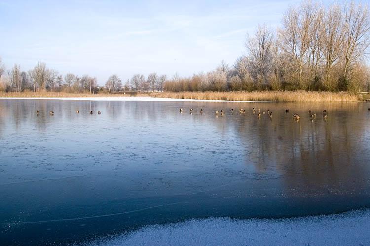 Winter in Naaldwijk(22-12-2007)