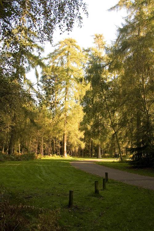 Sandringham forest, Norfok (UK) 23-10-2007)