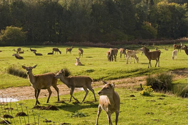 Snettisham farmpark 29-10-2008